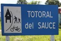 20120404004237-totoral-del-sauce.jpg